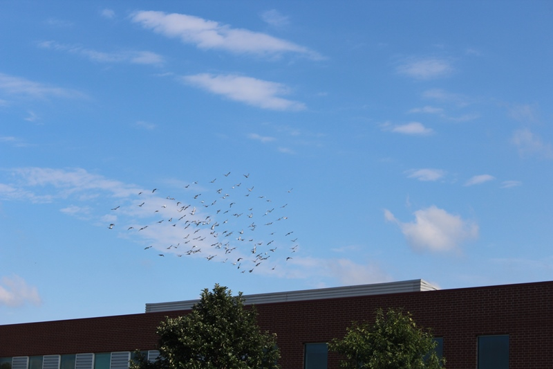 Birds fly over Fire at Five